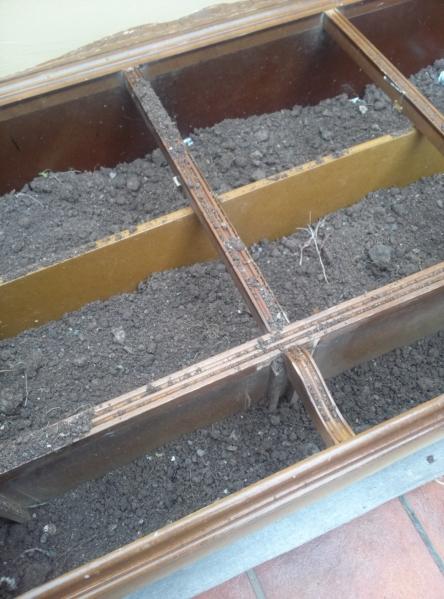 gradina de verdeturi in dulap 1