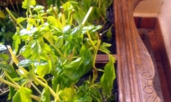 Fă-ţi o grădină de verdeţuri dintr-un dulap