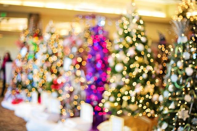 christmas-trees-1823943_640