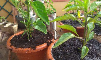 5 plante pe care le poţi creşte la tine acasă