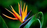 3 plante tropicale pe care le poţi creşte la tine acasă