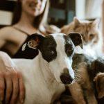 Să sterilizăm sau să nu sterilizăm animalele de companie?