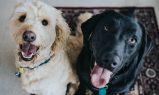 Aplicaţii utile pentru cei care au animale de companie